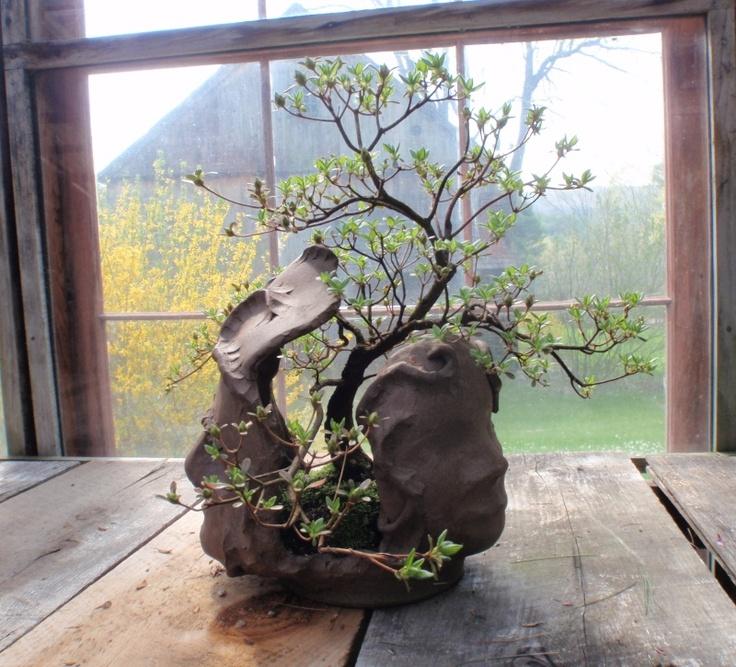 bonsai bellissimo