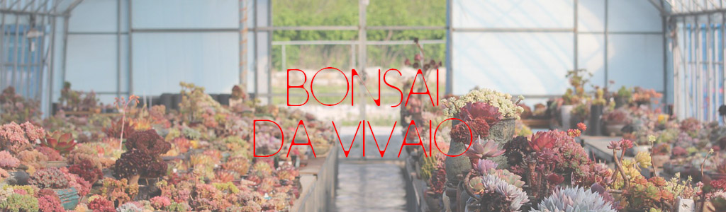 bonsai da vivaio