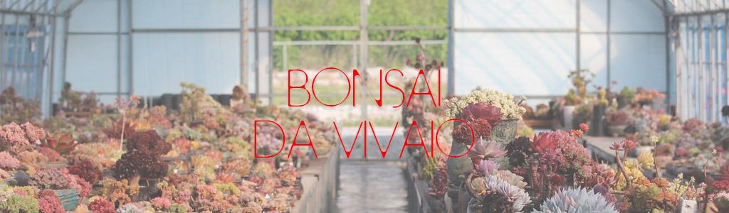 bonsai da vivaio