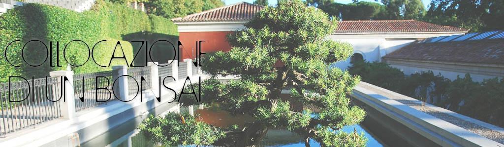 collocazione bonsai