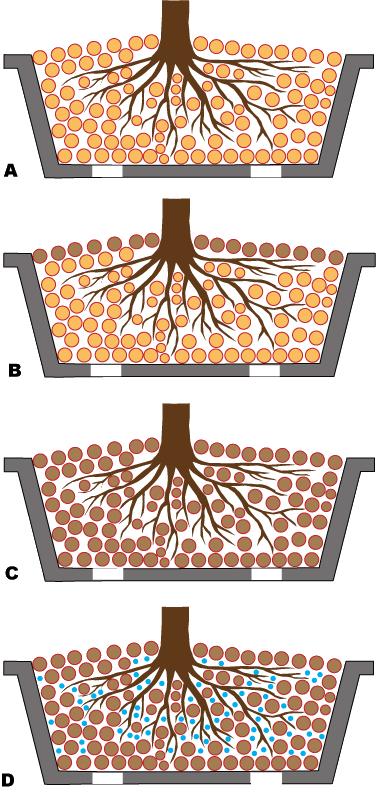 come annaffiare bonsai