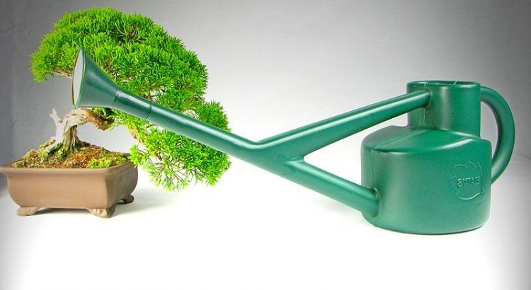 irrigazione bonsai interno