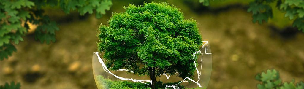 le basi del bonsai