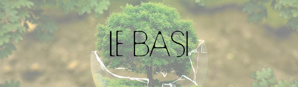 basi del bonsai