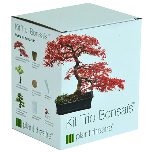 Kit Bonsai 1