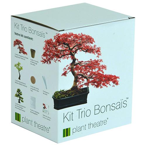 Kit bonsai per principianti per imparare a coltivare ibonsai for Vasi per bonsai prezzi