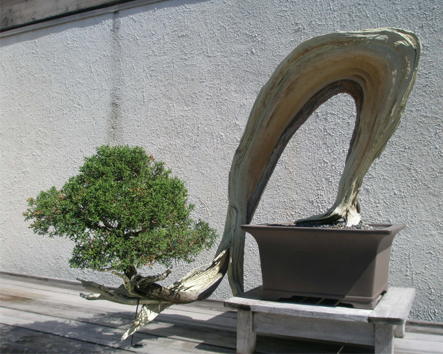 Gli stili del bonsai