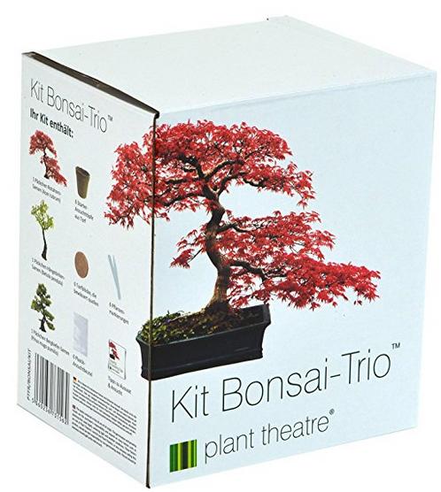 bonsai da interno per principianti